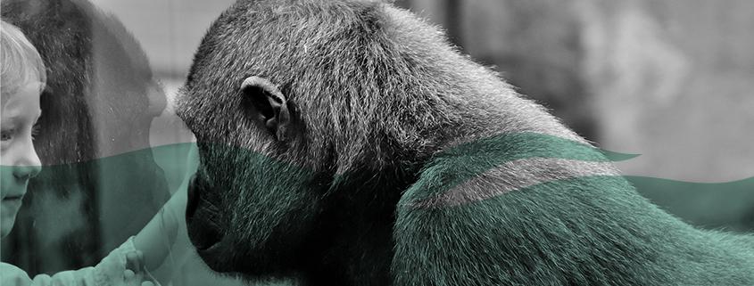 https://pixabay.com/de/gorilla-kind-trennung-schmerz-2322005/