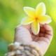 Fuehren_mit_Aloha-Titelbild