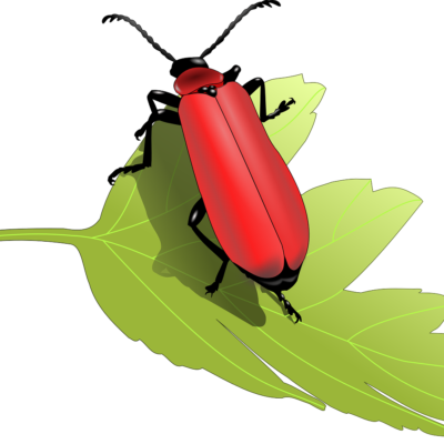 Nahrungsmittel für Insekten