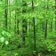 Bäume im Wald