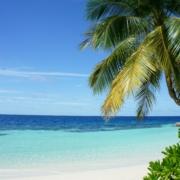 Palme vor Karibik-Panorama